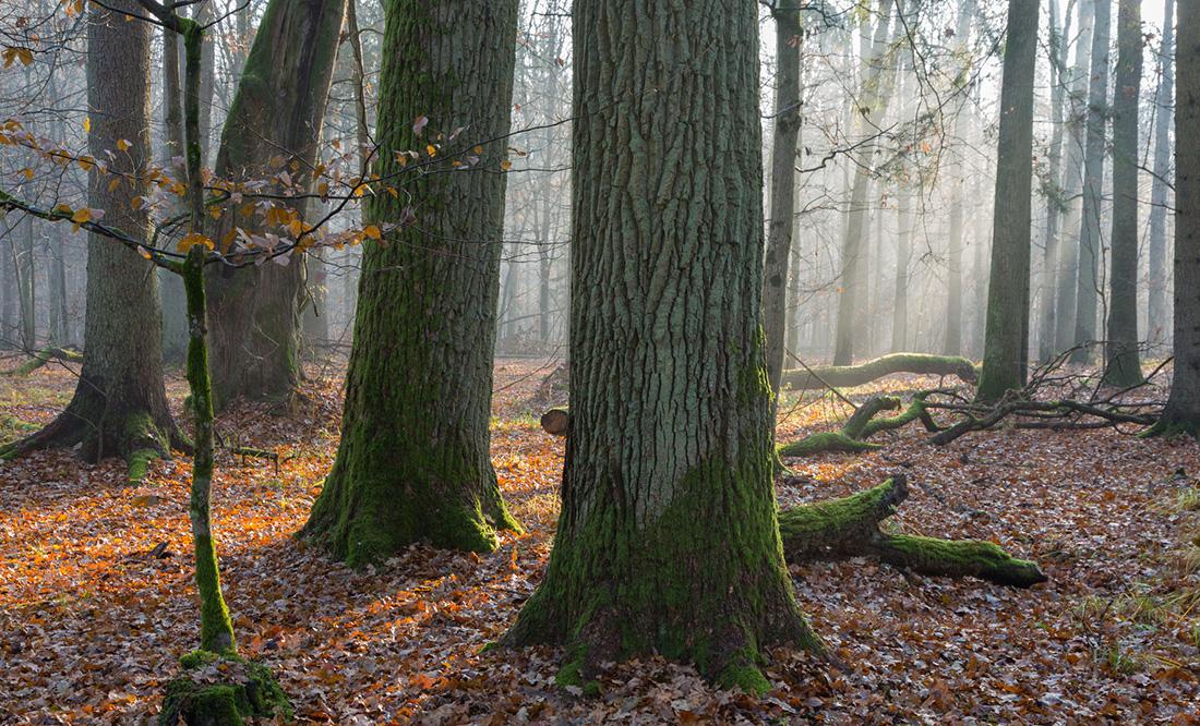 Parquets en chêne de Bourgogne